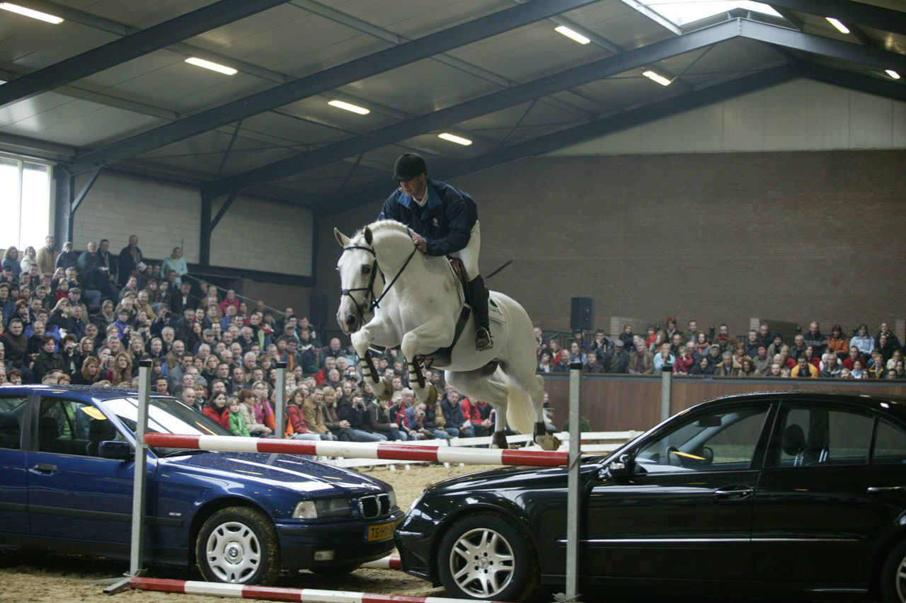 ... NIJHOF STALLIONSHOW 2015 FOR FREE VIA CLIPMYHORSE.TV | Team Nijhof