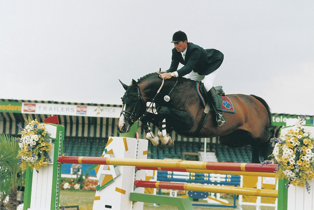 concorde, hengst, stallion, team nijhof, hengstenhouderij