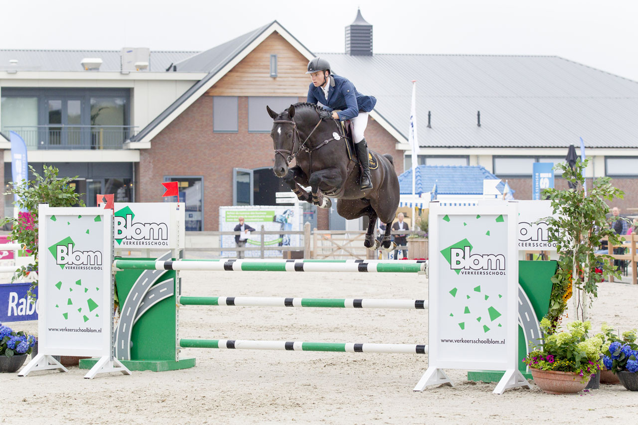 floris, stallion, hengst, team nijhof