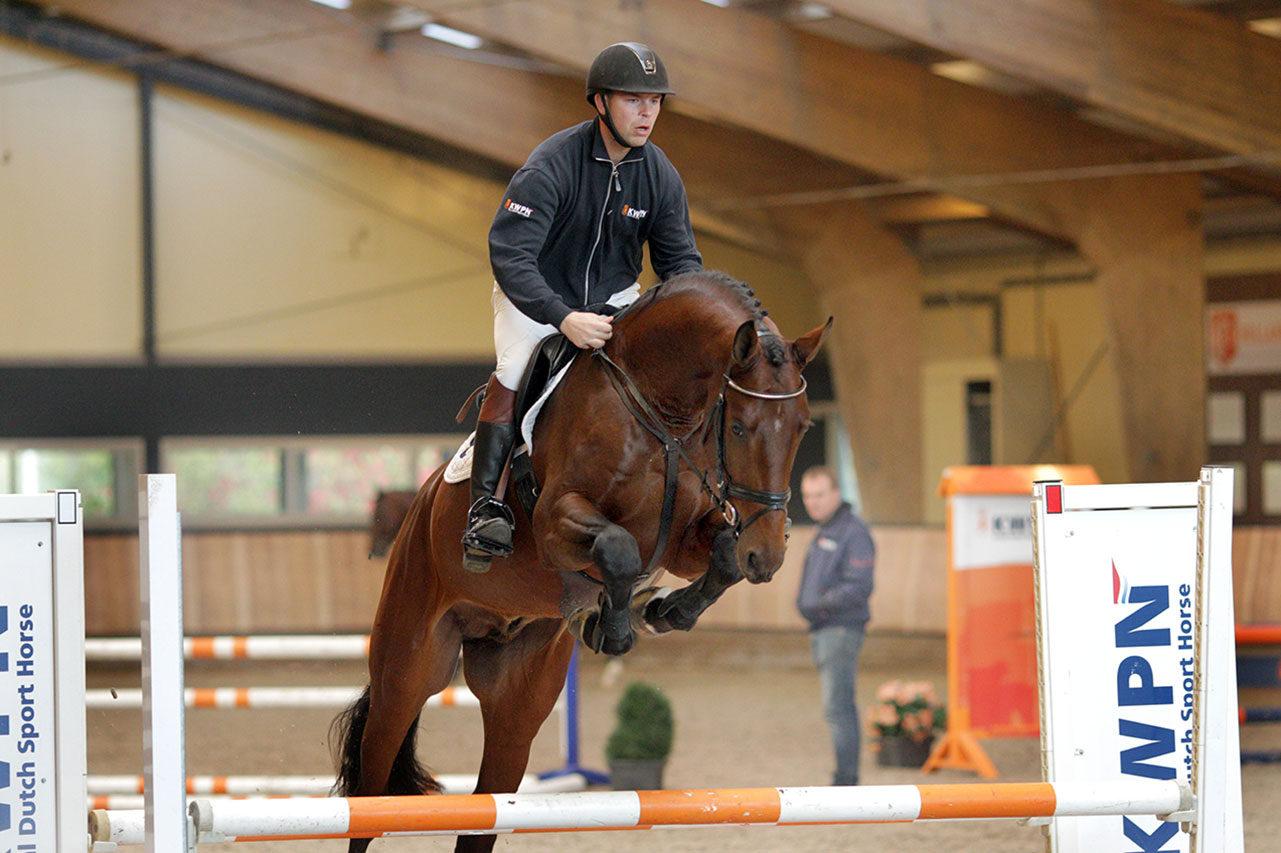 hengst, stallion, hengstenhouder, team nijhof, springen, hernandez