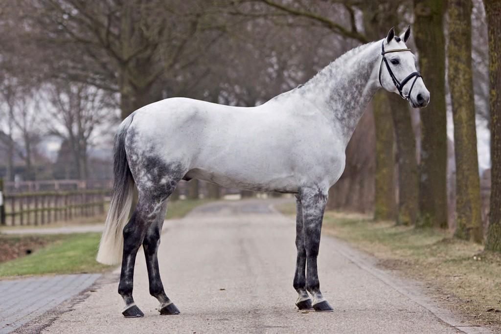 quality time, hengsten, stallion, team nijhof, hengstenhouder