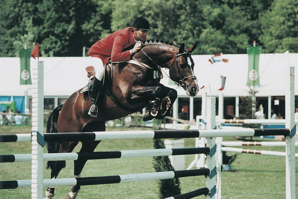 voltaire, hengst, stallion, team nijhof, hengstenhouder, fokker
