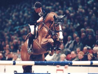 team nijhof, dekhengst, stallion