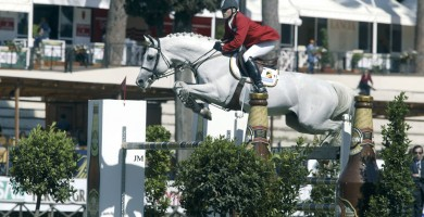 team nijhof, hengst, stallion, clinton, jumping
