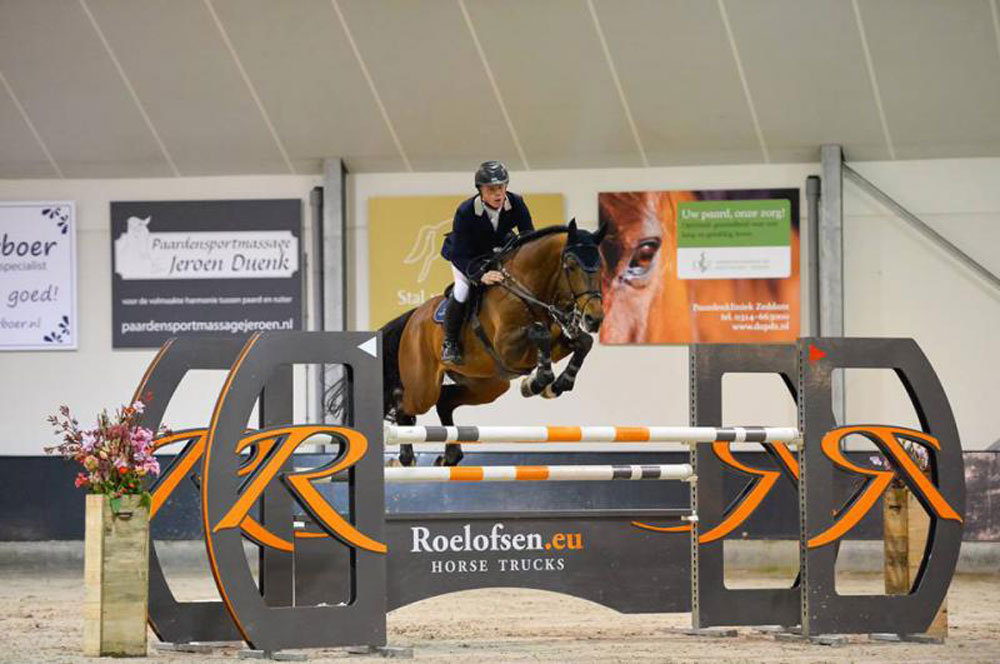 eldorado, stallion, hengsten, jumping, team nijhof