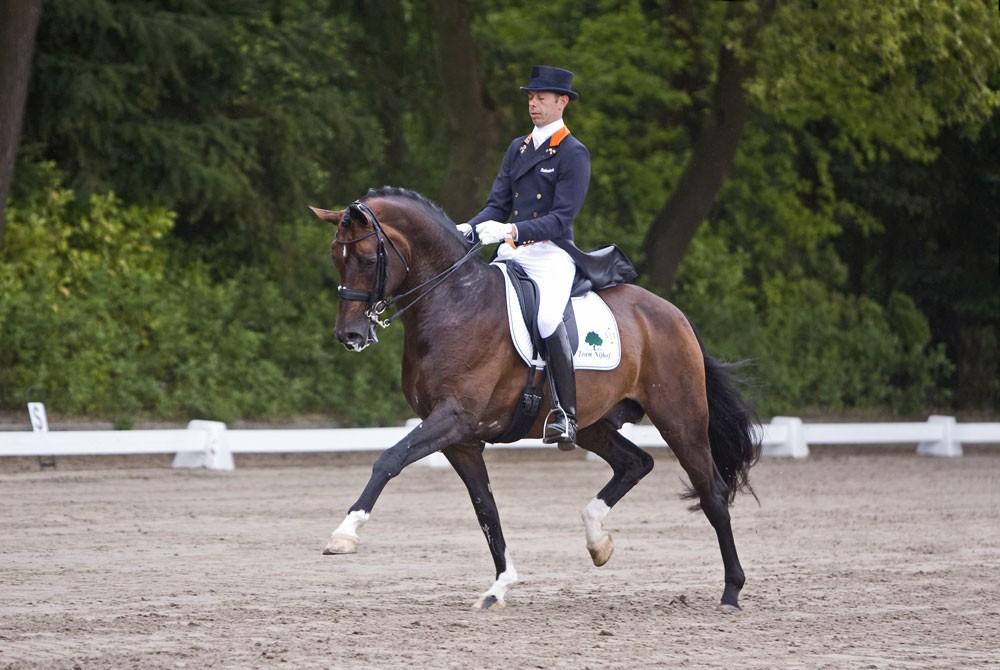 florencio, team nijhof, stallion, hengst, hans peter minderhoud, dressuur