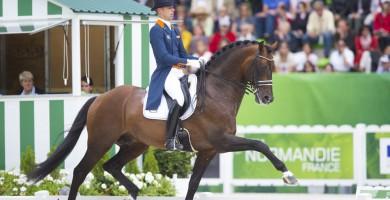 team nijhof, hengst, Johnson, stallion, dressage, hans peter minderhoud