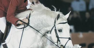 larino, apart, team nijhof, hengsten, stallions, jumping