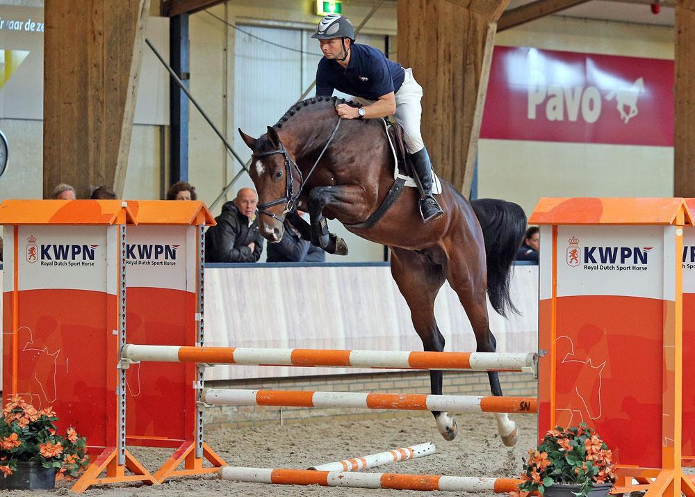 grandorado, hengsten, stallions, team nijhof, jumping