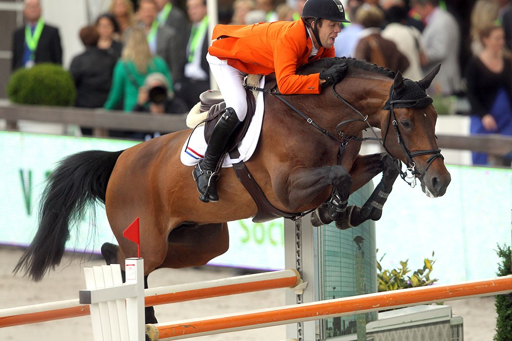 verdi, team nijhof, stallion, hengst, jumping