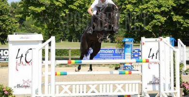 hengsten, stallions, jumping, team nijhof