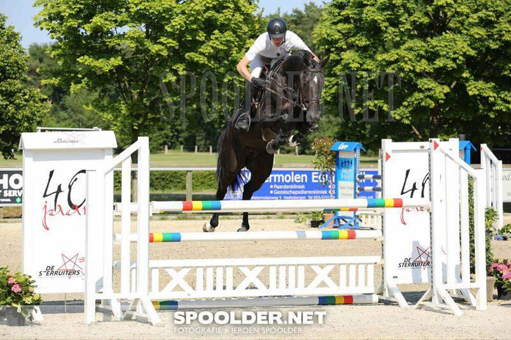 hengsten, stallions, jumping, team nijhof