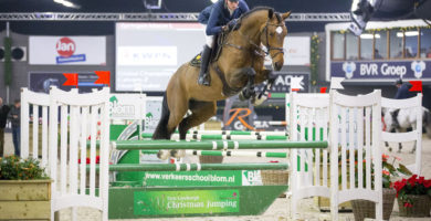 hengst, stallion, team nijhof, jumping, hengstenhouderij