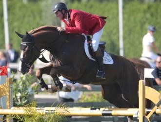 stallion, team nijhof, hengst, springen, jumping