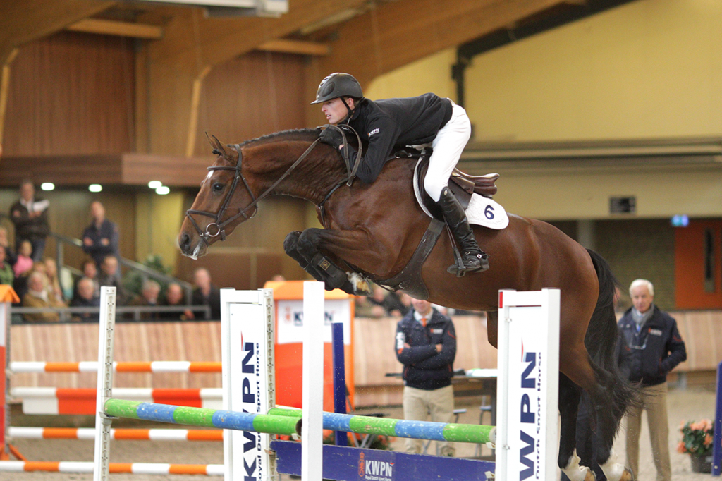 hengst, stallion, springen, jumping, team nijhof