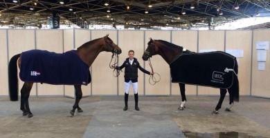 johnson, verdi, team nijhof, dressage, jumping, stallion, hengst