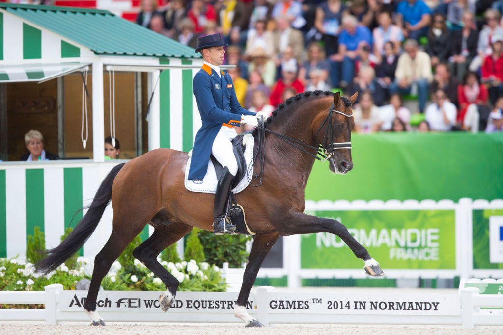 team nijhof, Johnson, dressage, dressuur, van minderhoud, jazz, hengst, stallion
