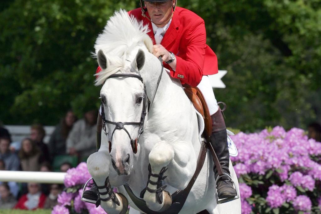 larino, hengst, stallion, team nijhof, hengstenhouder, fokkerij
