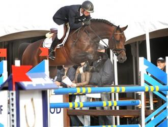 stallion, hengst, team nijhof, hengstenhouder, fokkerij