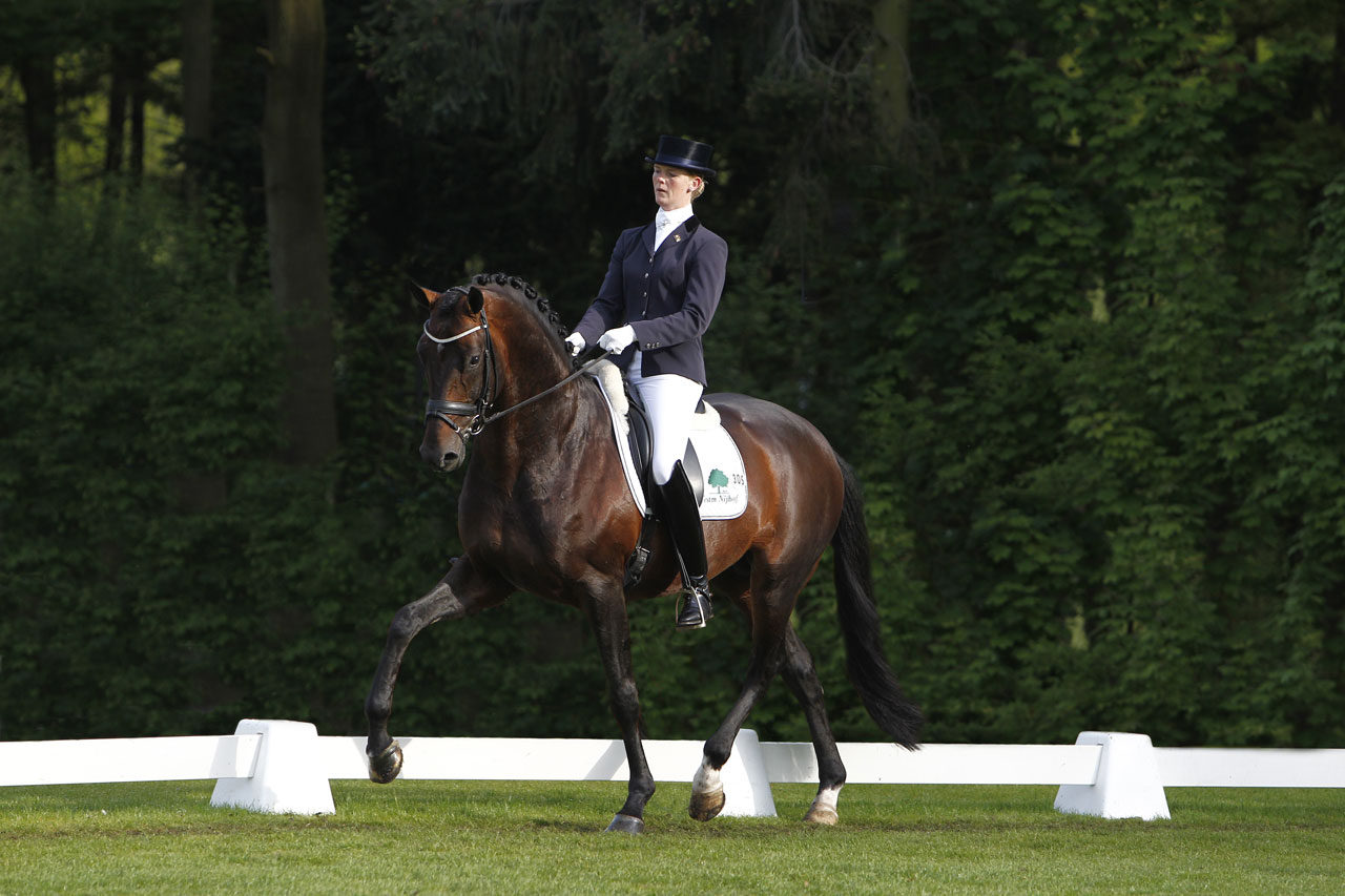spielberg, hengst, stallion, dressage, team nijhof