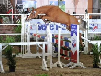 hengst, stallion, team nijhof, hengstenboer, fokkerij