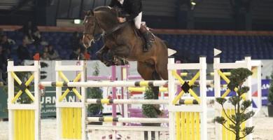 warrant, jumping, team nijhof, stallion, hengst