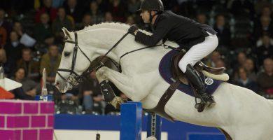 zacharov, hengst, stallion, hengstenhouderij, team nijhof