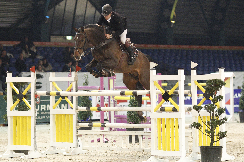 team nijhof, hengst, stallion